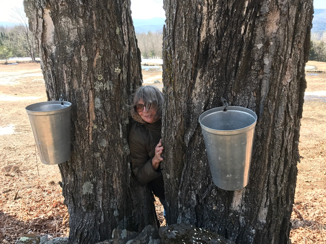 At 40 Gallons Of Sap To Make 1 Gallon Syrup You Can Imagine How Much Time That Takes